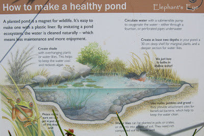 Garden pond for biodiversity