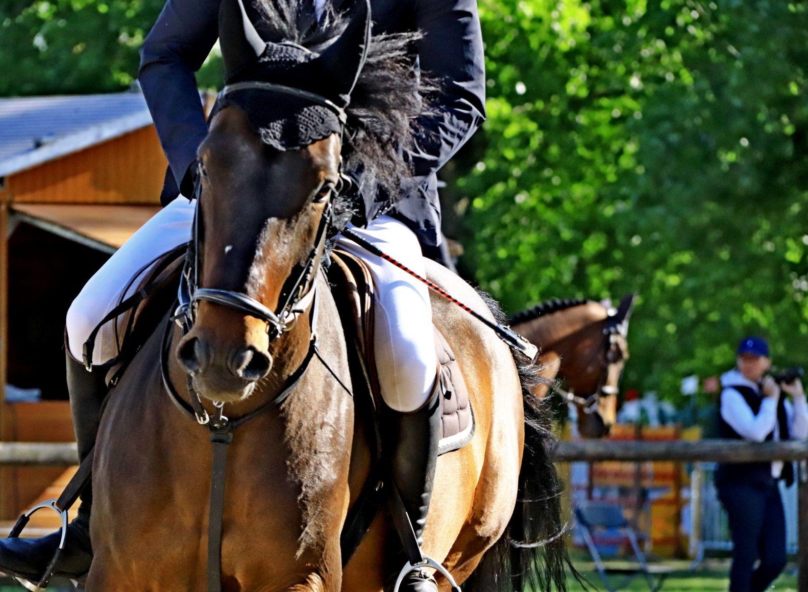 Cheval, cavalier