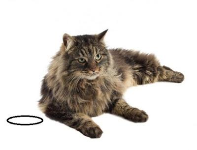 Cat-Siberian
