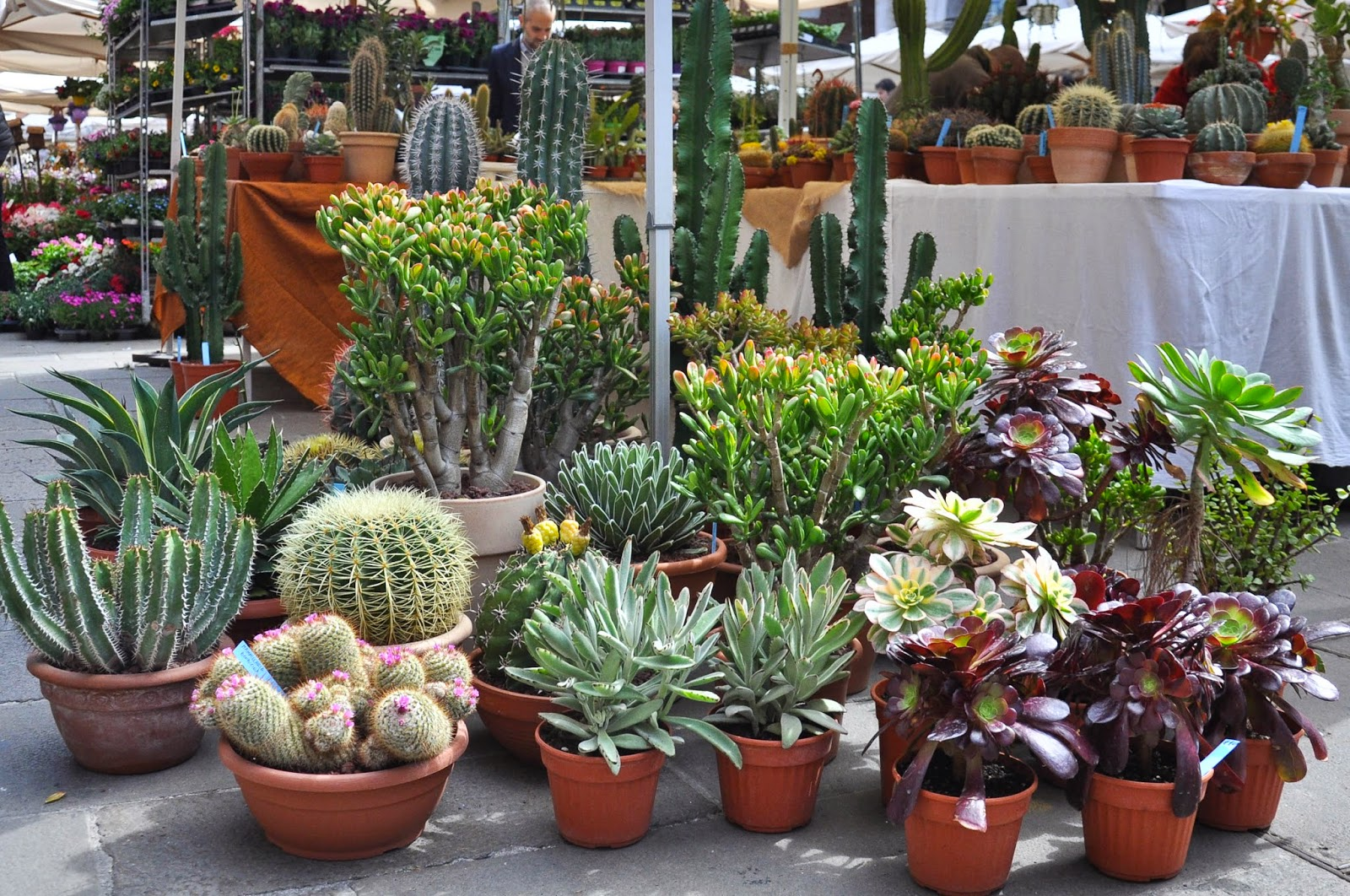 Cacti, 7th Edition of 'Fiori, colori, e...' - Floriculture market show, Vicenza, Italy