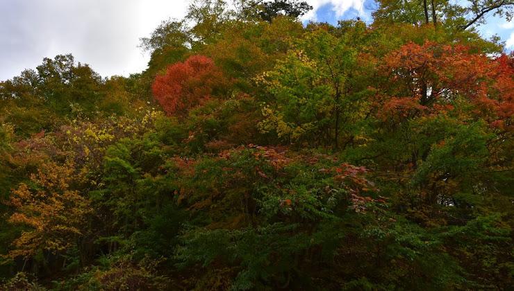 中禅寺湖湖畔の紅葉(2)