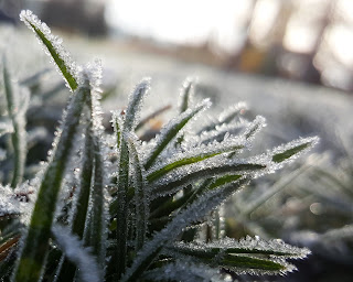 Frost Photo by Shaun Holloway on Unsplash