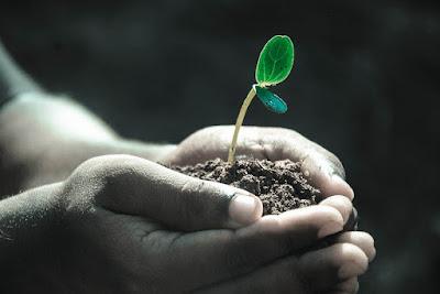 Image:https://pixabay.com/photos/hands-macro-plant-soil-grow-life-1838658/