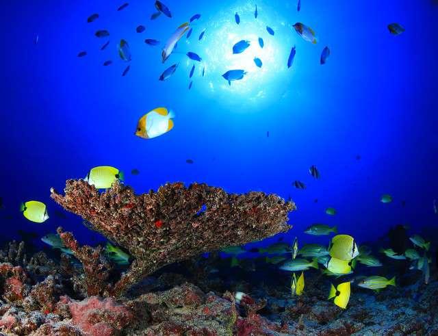Las áreas protegidas más bellas en el mundo