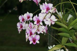 Singapore orchid garden. Сингапур, сад орхидей
