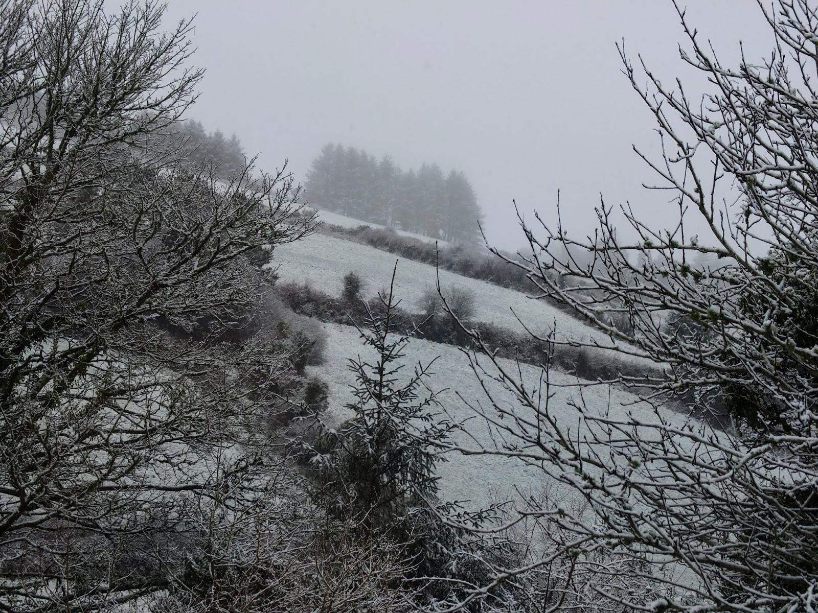 Snowy hillside landscape through a hedge.