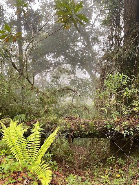 đảo của rắn Lanceheads ở Brazil