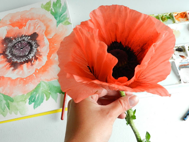 Coral Oriental Poppy Bloom and Watercolor Painting