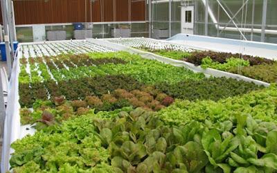 6 Excample Hydroponics Plants