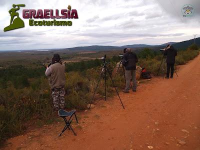 Lobo Ibérico en la Sierra de La Culebra