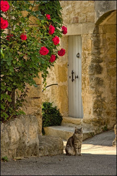 Charming limestone facade of rustic #Frenchfarmhouse with gorgeous painted wood door and cat near #climbingroses on Hello Lovely Studio