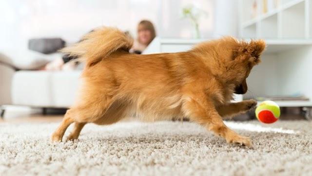 Παιχνίδια για τον σκύλο σας μέσα στο σπίτι