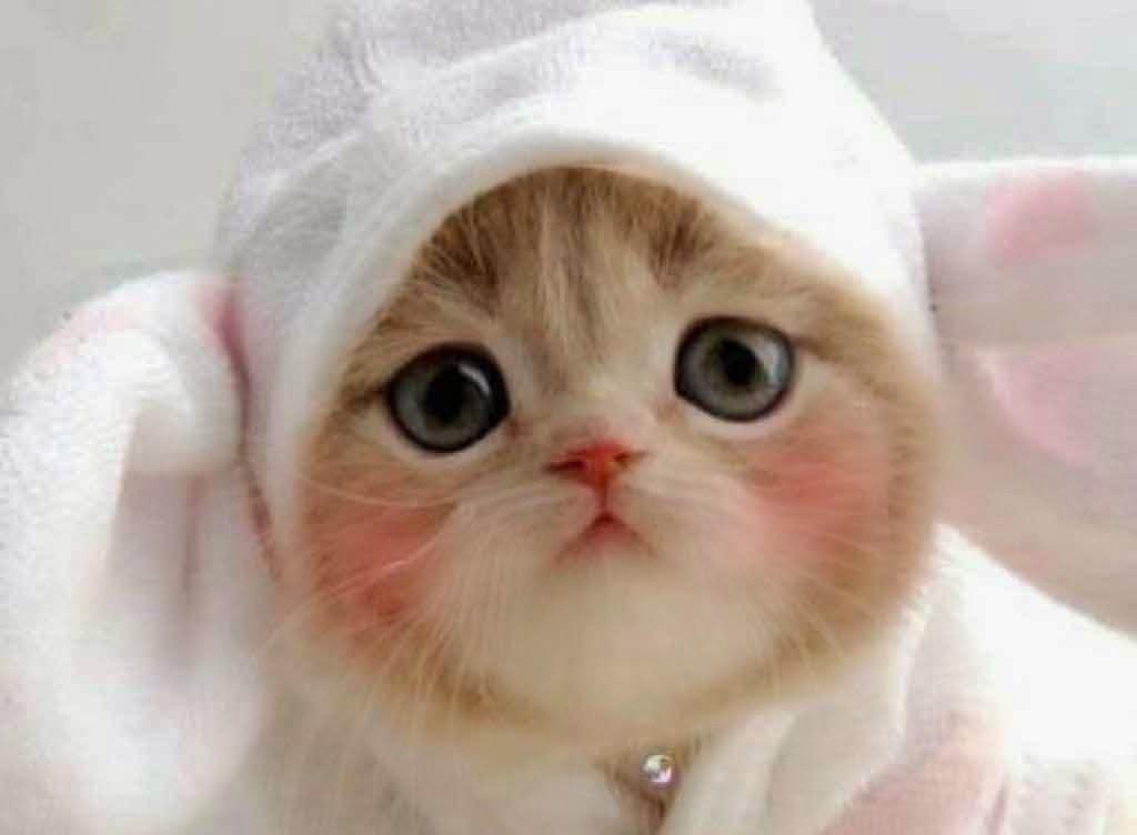 Foto Kucing Lucu Imut Dan Bikin Gemas