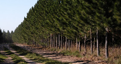 Los suelos forestales