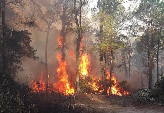 Lộ danh tính người đàn ông gây ra vụ cháy rừng lịch sử Hà Tĩnh
