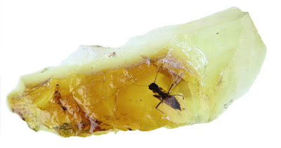 Amber With Two Flies That Got Stuck Mating 40 Million Years Ago Discovered