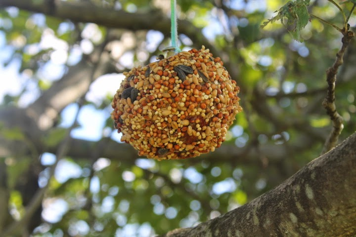 Apple Bird Feeders