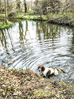 Dog in the River Otter