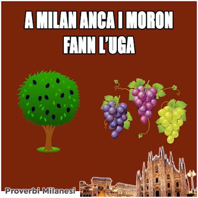 A Milan anca i moron fann l'uga     Traduzione:      A Milano anche i gelsi fanno l'uva     Significato:    A Milano ogni cosa è possibile!