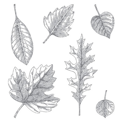 https://www.stampinup.com/ECWeb/product/138802/vintage-leaves-photopolymer-stamp-set?dbwsdemoid=1000037