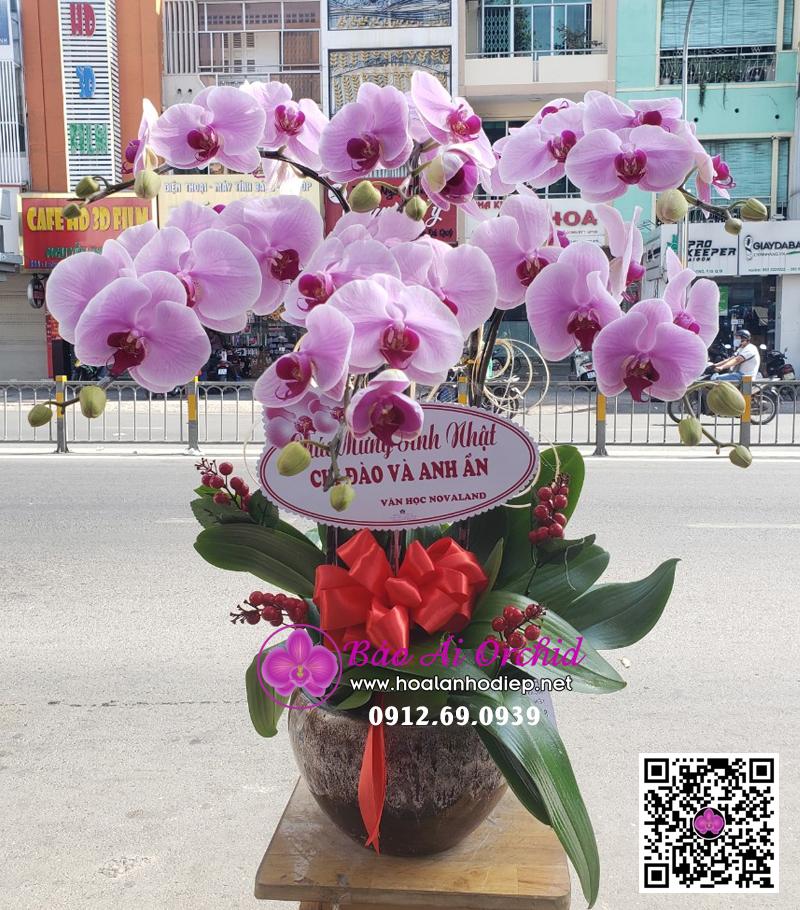 chậu hoa lan hồng 6 cành đẹp biếu tết