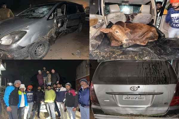 gaurakshak-and-police-save-4-cows-life-dharuhera