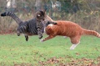 Agar Kucing Tidak Berantem Beserta Cara Mengatasinya