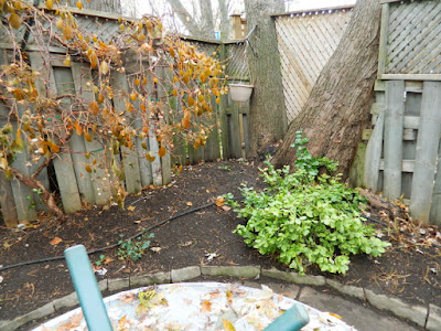 Greenwood-Coxwell Toronto Fall Garden Clean up after by Paul Jung Gardening Services