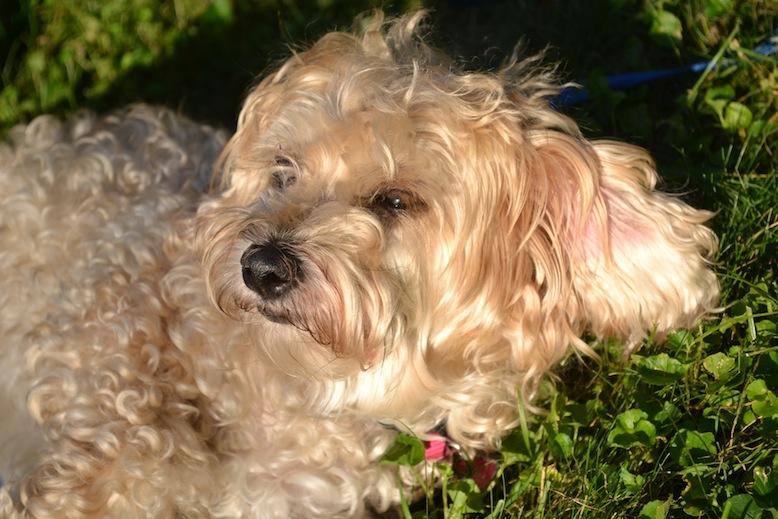 dogs like sun