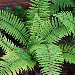 Adaptasi Morfologi pada Tumbuhan
