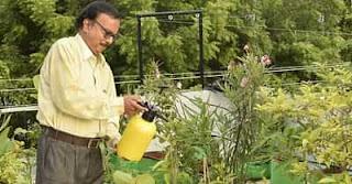 Retired Couple's Spectacular Terrace Paradise Has Made Them 'Gardening Gurus'