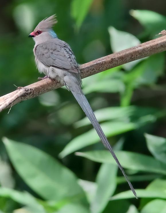 Klasifikasi Ordo Pada Aves dan Contohnya  Generasi Biologi