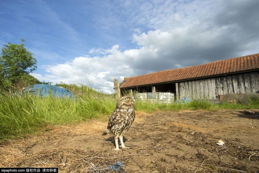 British photographer to capture stunning owl shocking moment