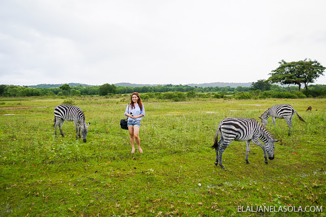 Coron | Calauit Safari Park & Pamalican Island (Natural Arts Travel and Tour) Palawan