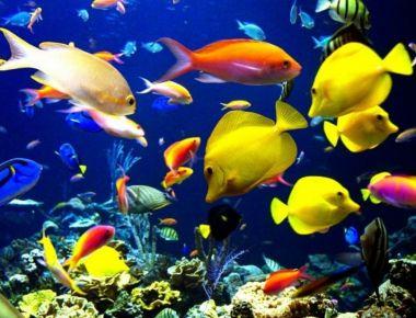 Por qu los peces no se hunden universo animal for Tipos de jaulas para peces