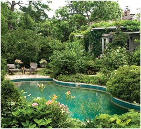 Swimming Pool Surrounded By Plants Swimming Pools And Ponds Pictures