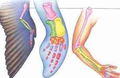 সমসংস্থ অঙ্গ (Homogeneous organs)