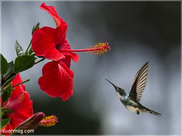 صور زهور 15 | Flowers Images 15