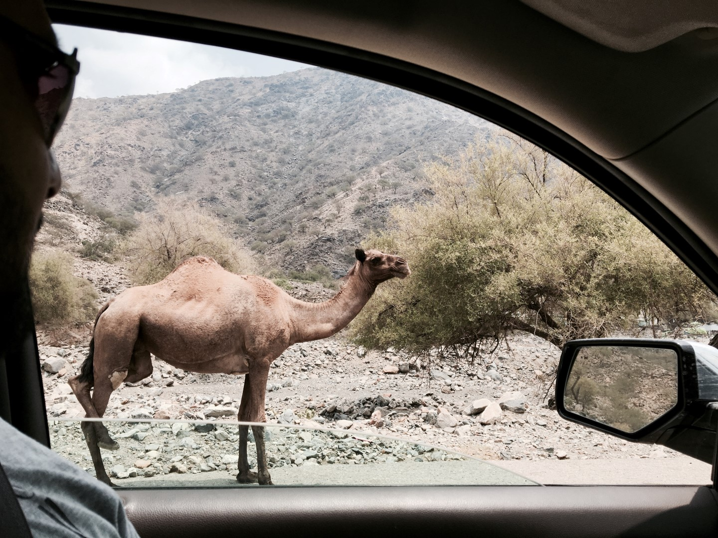 A Road-trip to Al Baha, Abha and back to Yanbu