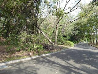 山田池公園 倒木 台風21号 被害