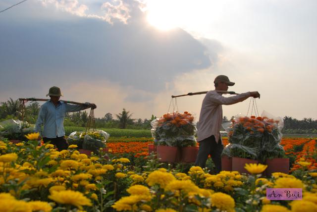 My Phong flower village