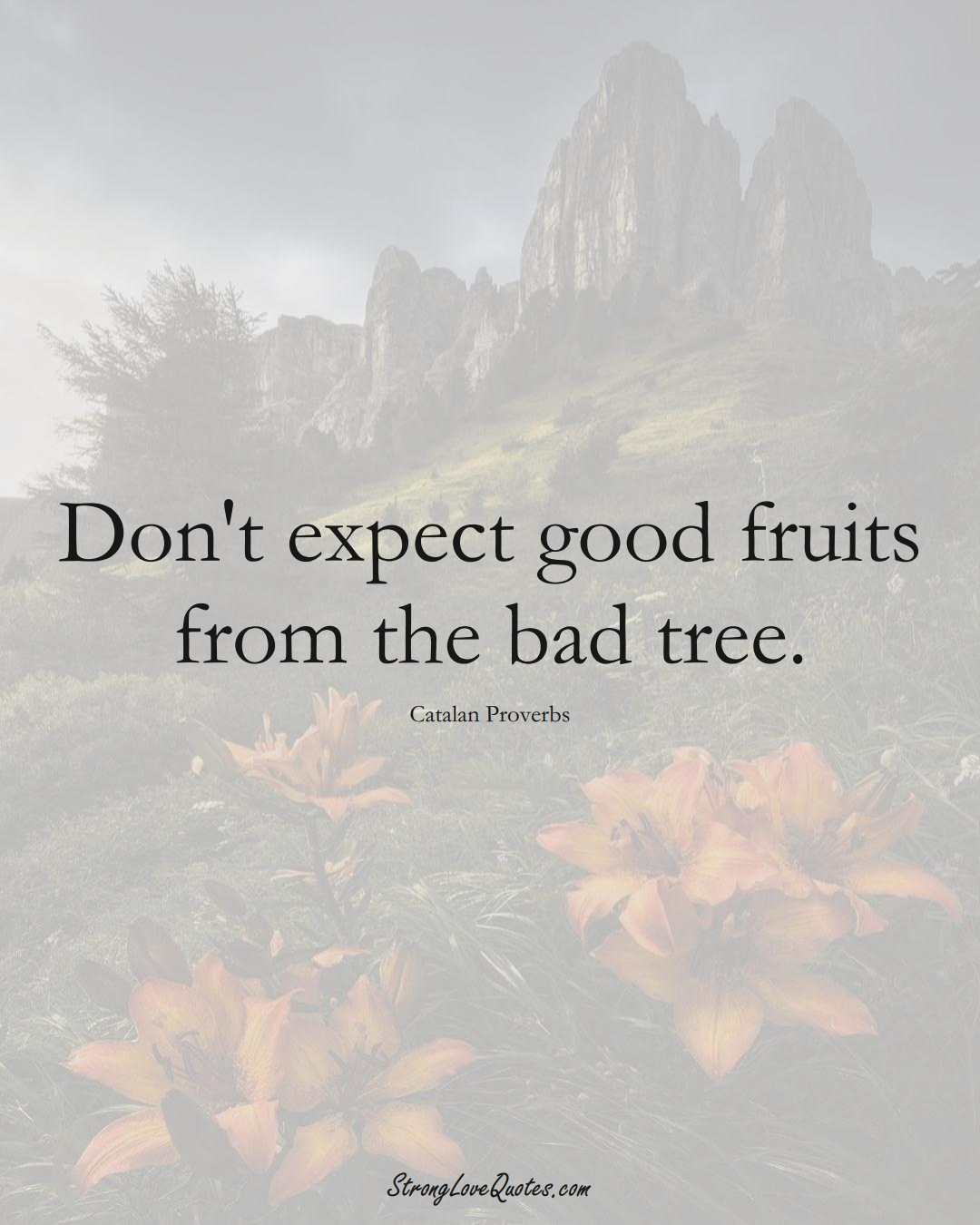 Don't expect good fruits from the bad tree. (Catalan Sayings);  #EuropeanSayings
