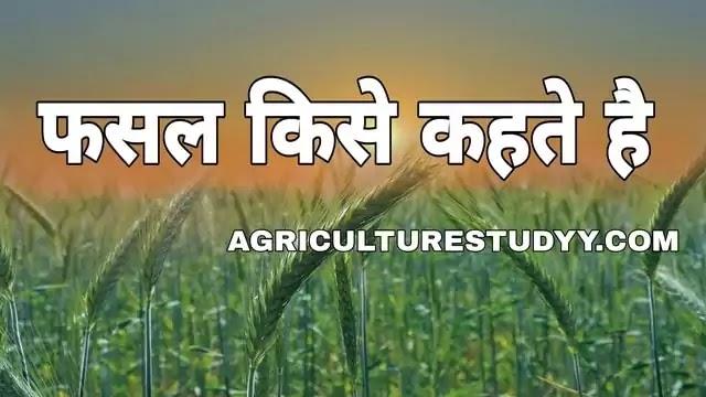 फसल किसे कहते है, फसल की परिभाषा, फसल कितने प्रकार की होती है इनका वर्गीकरण, फसलों का महत्व एवं उत्पादन के सिद्धांत, crop n hindi, fasal in hindi, फसल