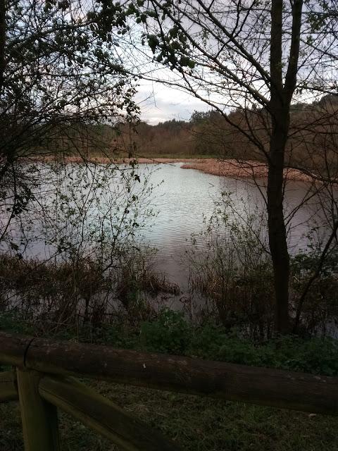 Pantano y vegetación de la Aliseda pantanosa