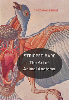 Stripped Bare The Art of Animal Anatomy