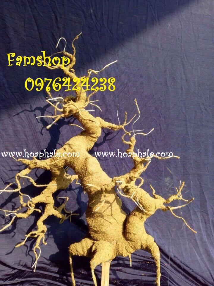 Goc bonsai mai dao tai Pham Van Bach
