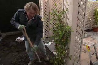 David plants a honeysuckle