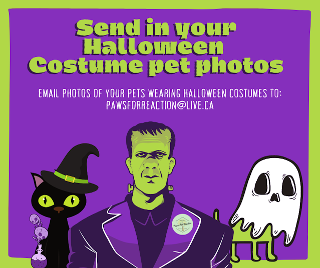 Looking for spooky pets in Halloween costumes to be featured