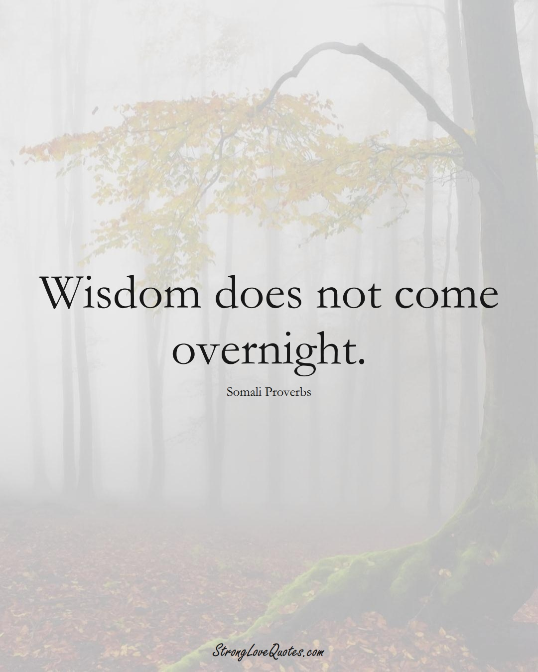Wisdom does not come overnight. (Somali Sayings);  #AfricanSayings