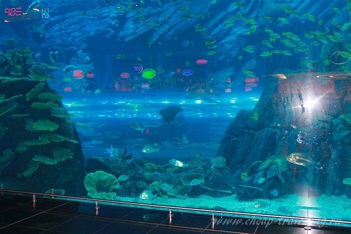 Гигантский аквариум